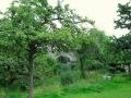 Obstbäume auf Drei-Eichen