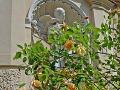 Rosen und Skulpturen (Halle, Saale)