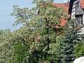 Villen in Giebichenstein, Halle (Saale)