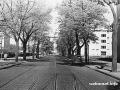 Seegefelder Straße in Spandau 1957