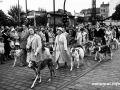 Rassehunde-Verein Spandau beim Festumzug 1957